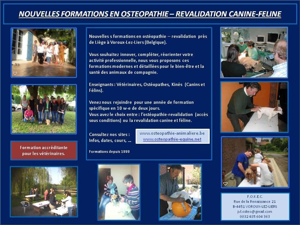 Formation ostéopathie Canine et féline